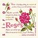 G015 Sirop de Roses